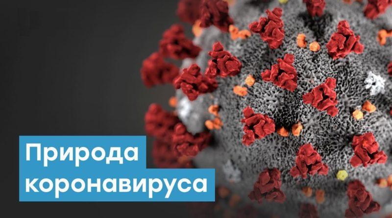 Каковы мифы и правда о коронавирусе?